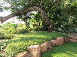 A no-mow lawn