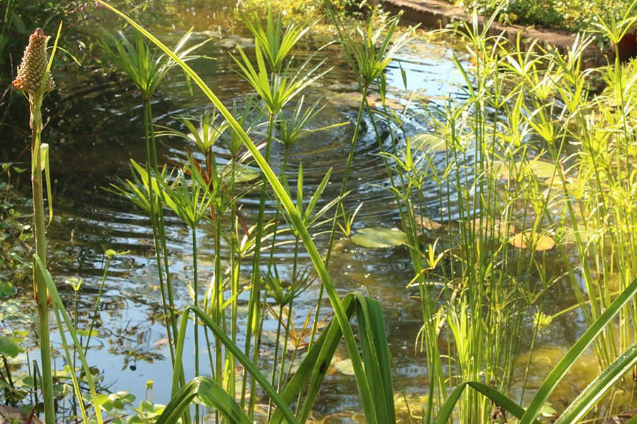 Keep some open water for dragonflies