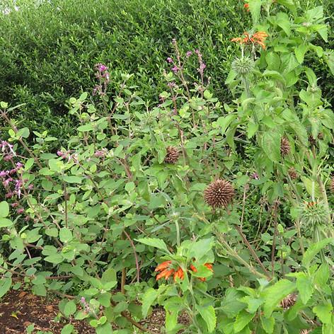 A wildlife-friendly shrubbery