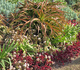 Succulent bank South Africa
