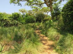 Soft sand path