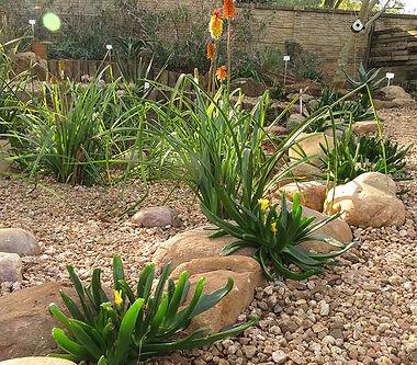 Aloe immaculata / Aloe affinis
