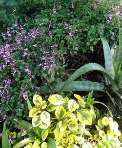 A seasonal mix: leaf, form, flower