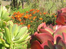 Spectacular Succulents