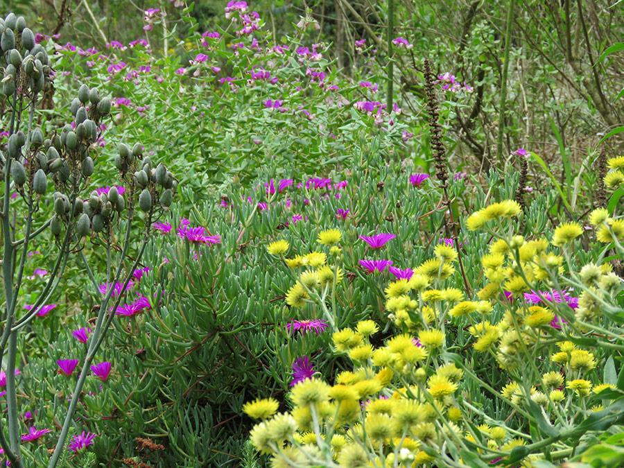 A Wild Flower Garden