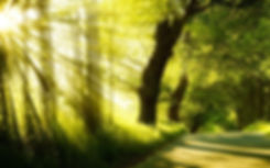 Light through trees 4.jpg
