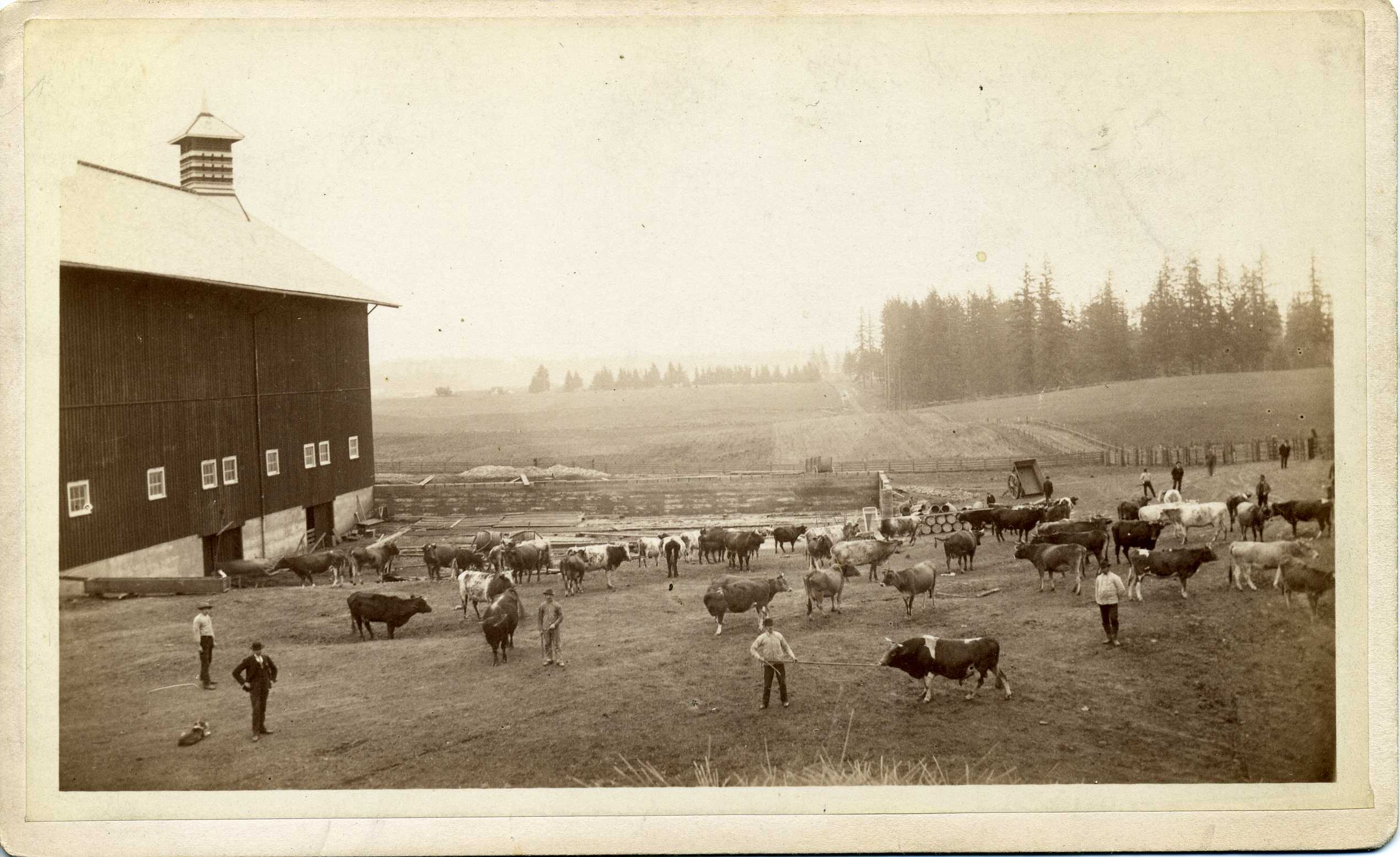 Ladd Hazelfern Farm