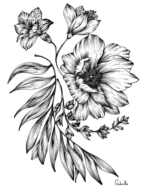 Sorella Illustration