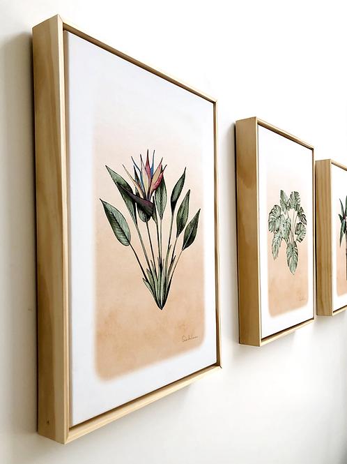 Trio Botânico Emoldurado