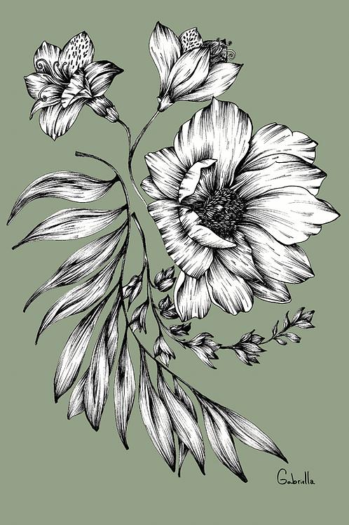 Sorella Color Illustration