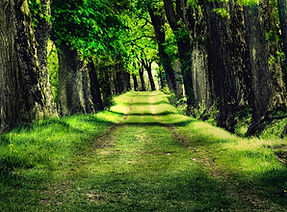 Forest-park-trees-grass-photo_1920x1080.