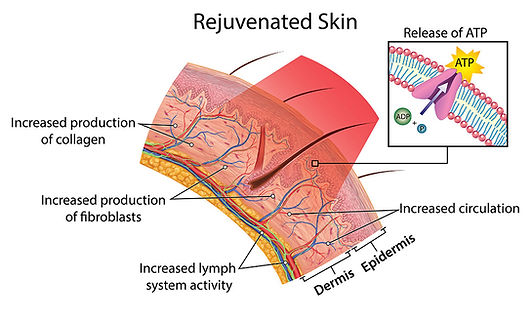 rejuvenated_skin-980.jpg