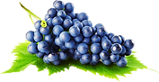 vinograd-1.png