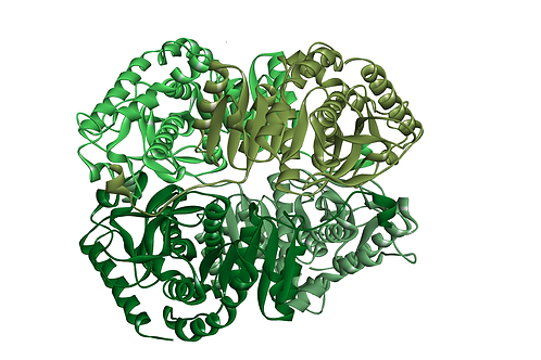 Lactate Dehydrogenase (LDH-101)