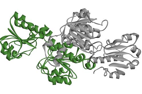 Formate Dehydrogenase (FDH-101)