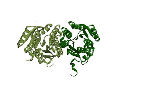 Glucose Dehydrogenase (CDX-901)