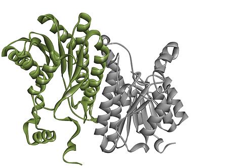 Glucose Dehydrogenase (GDH-105)