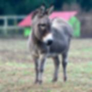 Donkey Thornbury Farm.png