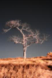 Tree cross processed 16x24 200 ppi flatt