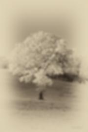 Tree IR.png