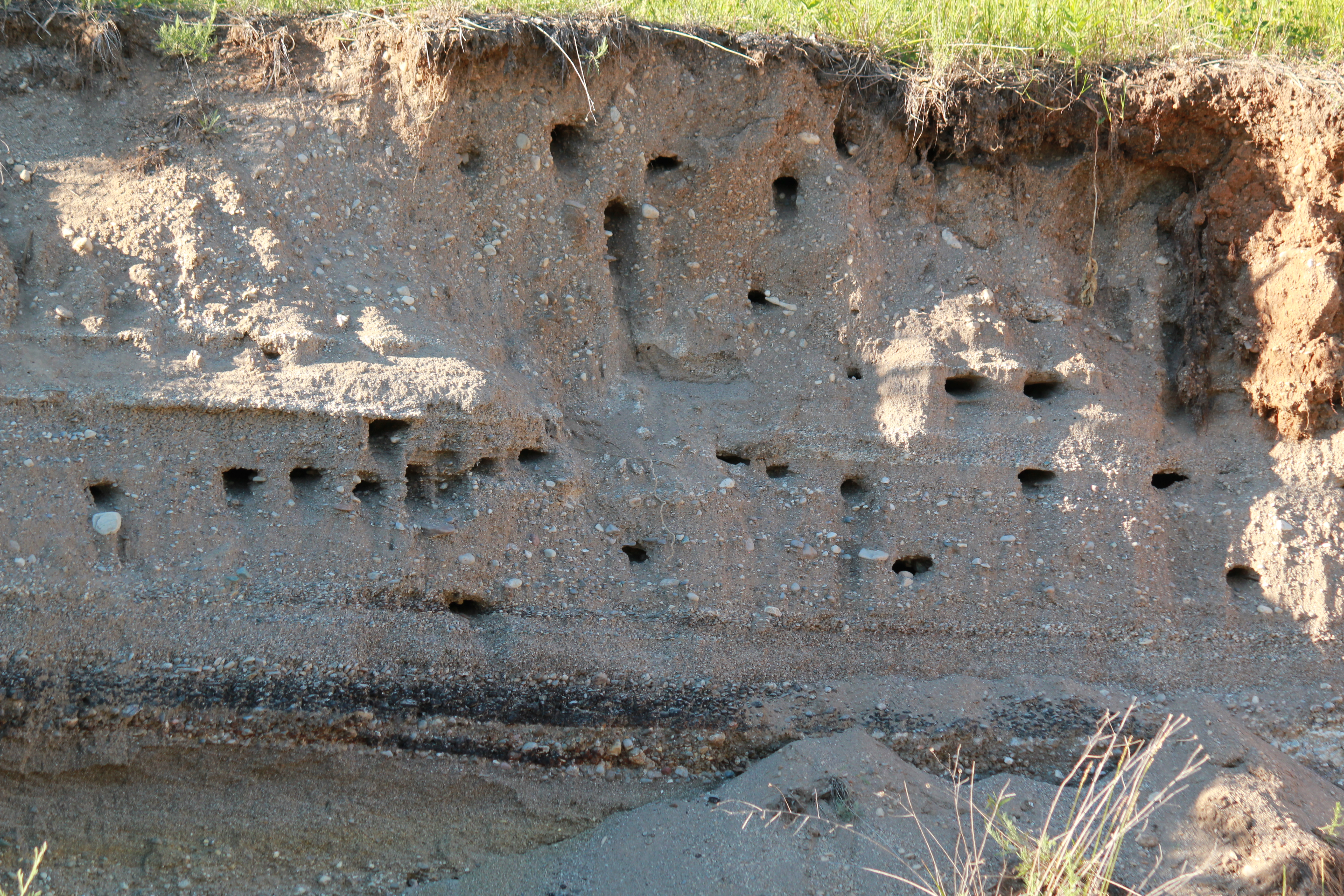 Bank Swallow Nesting Site (THR)