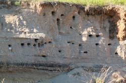 Bank Swallow Nesting Site (THR)