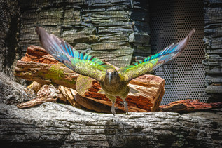 Malcolm Bishop | Auckland Zoo