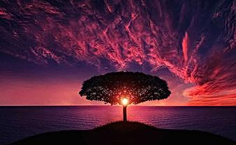 tree-736885_960_720.jpg