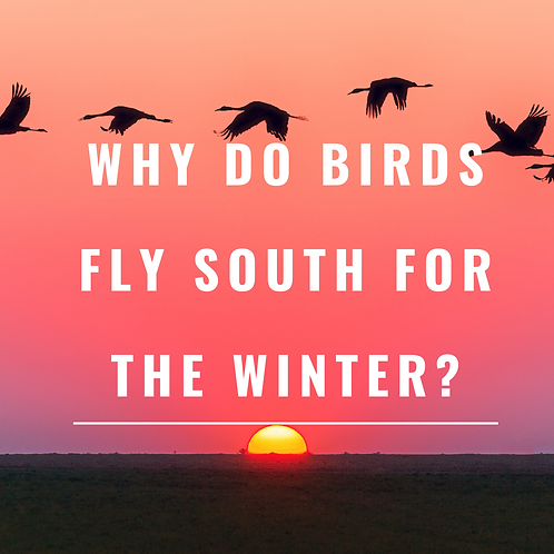Why do birds fly south for the winter?