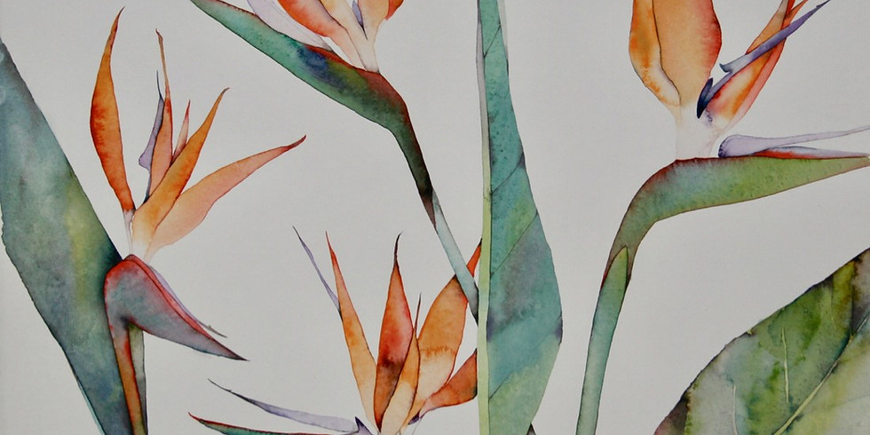 Freedom in Watercolour with Julie Collins