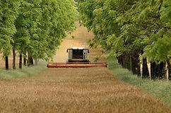 Claude Jollet - barley harvest.jpg