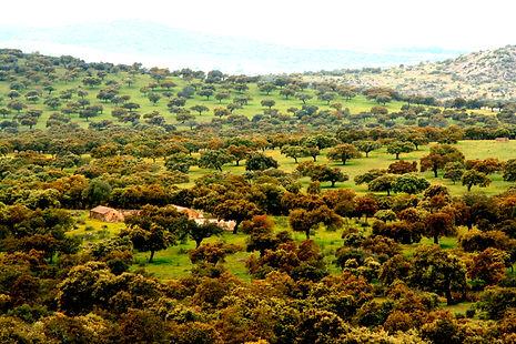 Agroforestry nut