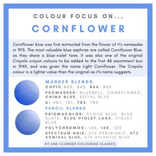 09 Cornflower