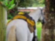 horsexperiences.jpg