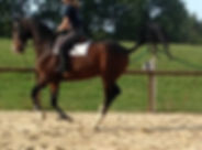 horsexperiences france.jpg
