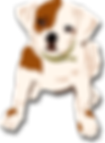 dog-295116_1280.png