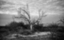 treeblackandwhitewithsoft.jpg