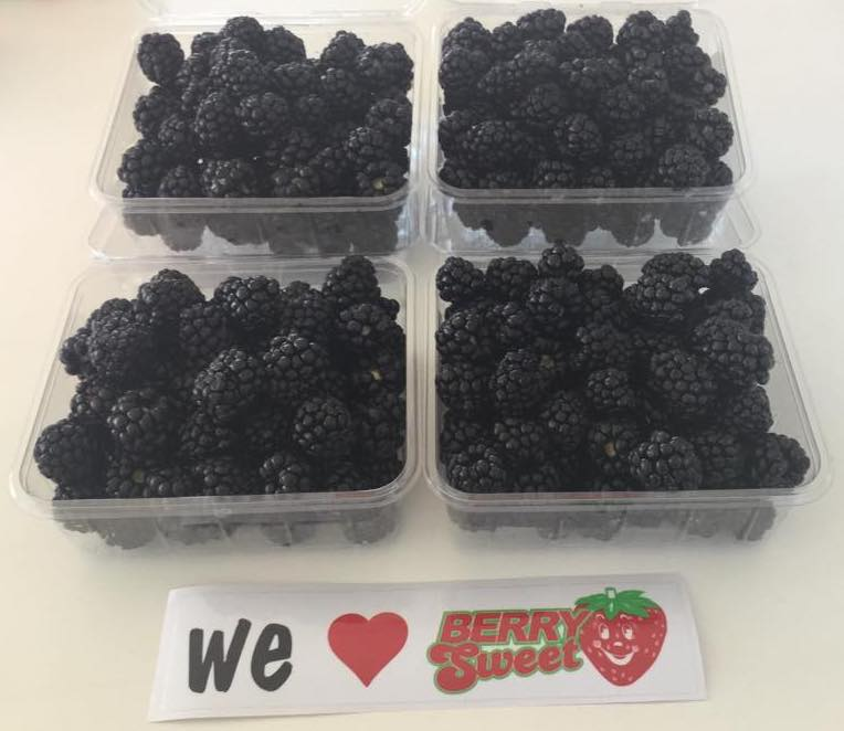 Fresh WA Blackberries