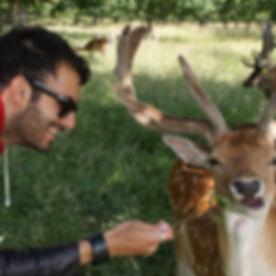Phoenix Park ciervos tour español privado Dublin