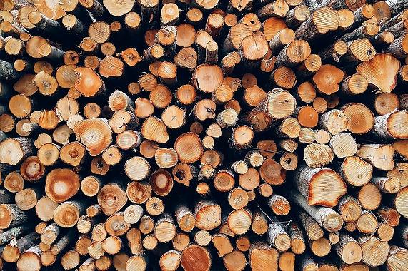 S29 - Valorizzazione filiera del legno