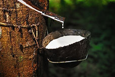 Naturelle 100% Natural Latex sap
