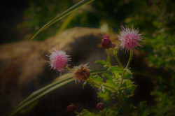 Nature shoot