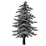 Icon-Trees.jpg