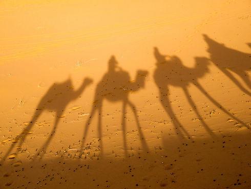 camel-2482792.jpg