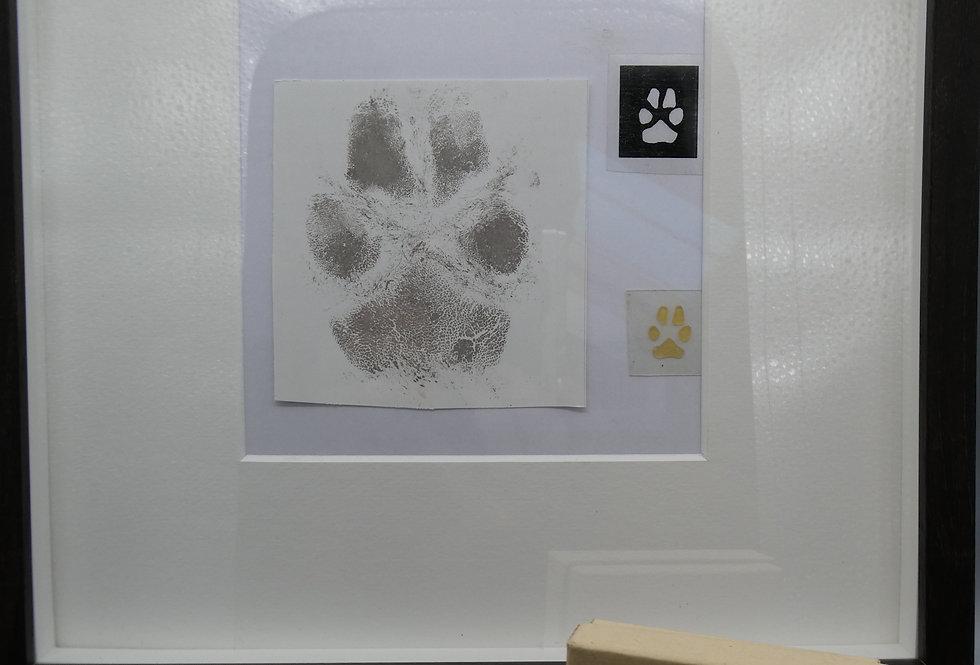 Pet Print Box Frames