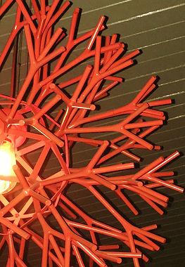 light coral 2.JPG