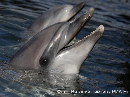 Запрет на вылов косаток и дельфинов для дельфинариев