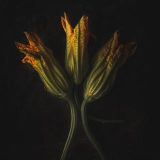zucchini_flowers.jpg