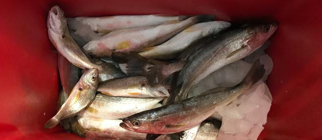 【日帰り、週末レジャー その1】『釣りに行こう!』 ガルベストン Seawolf Park