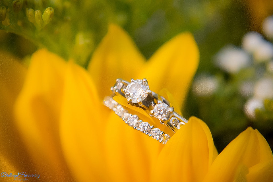 Wedding photography united states brittany harmening photography wedding photography united states brittany harmening photography wedding rings in yellow flowers mightylinksfo